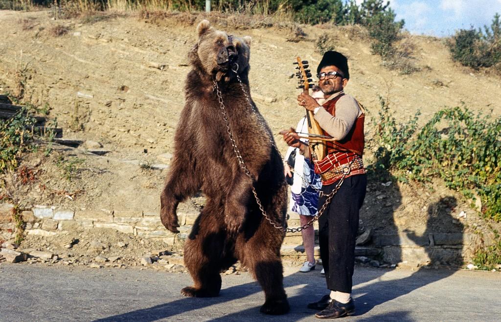 Dancing_bear_in_Bulgaria_about_1970